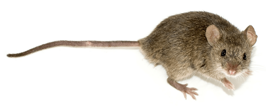 Mice, post hoc tests anddiffograms