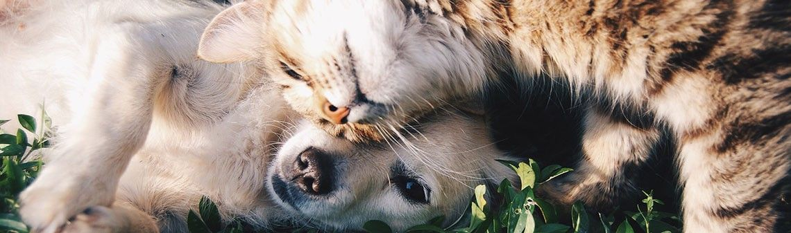 Do cats or dogs live longer?