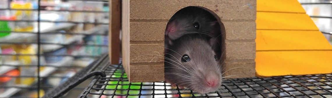 Mice, post hoc tests and diffograms